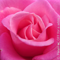 Masque au miel et à l'eau de rose pour les peaux mixtes